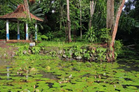 Balong Keramat Darmaloka terletak di Desa Darma, Kecamatan Darma, Kuningan