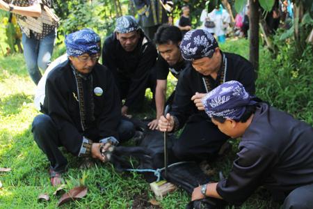 Nugel Si Pelen merupakan tradisi yang dilakukan dalam puncak acara Seren Taun di Kampung Budaya Sindang Barang