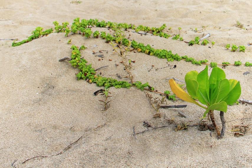 Selain menikmati pantai dengan pasirnya yang putih, pengunjung juga dapat menikmati kesegaran udara di sekitar pantai ini