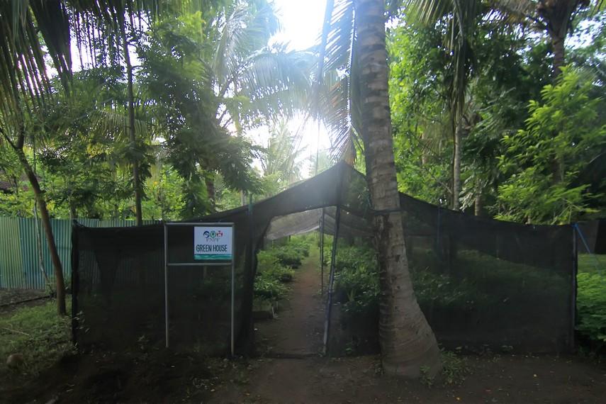Selain dalam program konservasi jalak Bali, para relawan juga dilibatkan dalam aktivitas lain seperti merawat green house