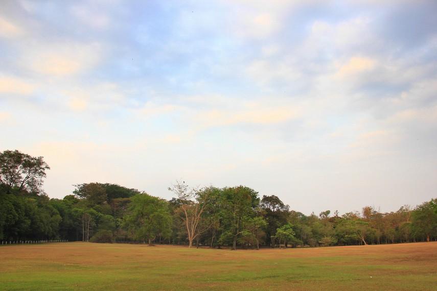 Kebun Raya Purwodadi mempunyai ribuan koleksi tanaman, diantaranya tanaman langka dan berusia ratusan tahun yang hanya ada di Indonesia