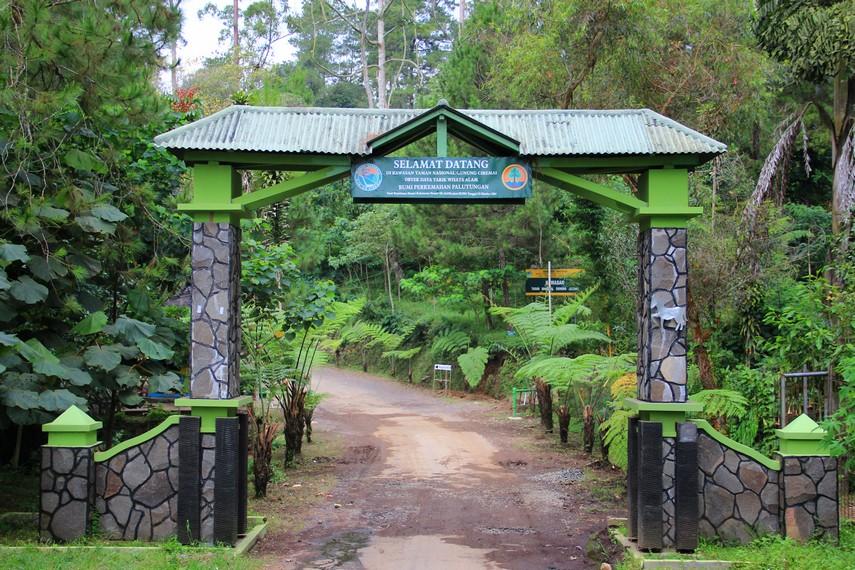 Wisata Alam Palutungan terletak di Desa Palutungan, Kecamatan Cigugur. 30 menit dari pusat Kota Kuningan