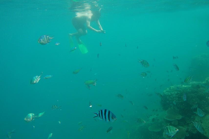 Pemandangan indahnya terumbu karang beserta ikan-ikan cantik menjadi salah satu yang terindah di Pulau Karimunjawa