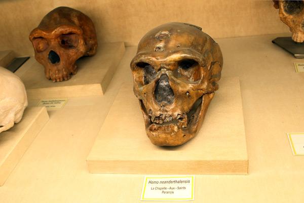 Beberapa jenis fosil dan replika tengkorak manusia purba yang menjadi koleksi Museum Geologi