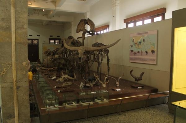 Museum ini memiliki koleksi fosil dari berbagai masa