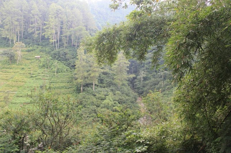 Pemandangan Sungai Cikapundung di dasar Lembah sepanjang rute tracking Dago Pakar - Lembang