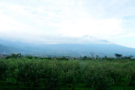 Agrowisata Apel di Kota Batu memiliki luas 17 hektar