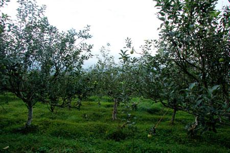 Agrowisata Apel menjadi kebanggaan warga kota Malang