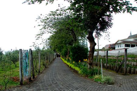 Jalan setapak menuju kebun apel