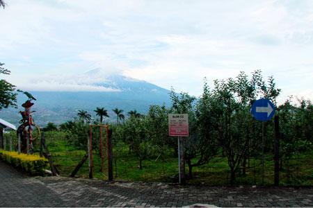 Pemandangan Gunung Wilis menjadi latar belakang di Agrowisata Apel