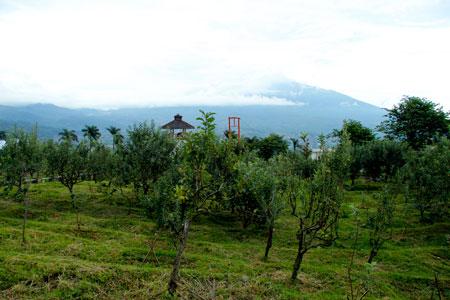 Sejuknya Agrowisata Apel di kawasan Batu Malang