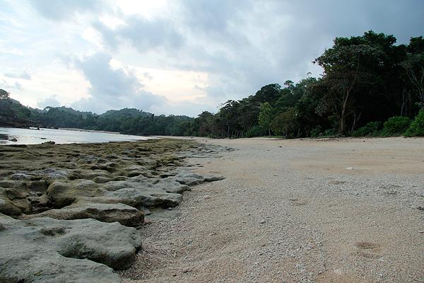 Hutan dengan latar belakang pohon pohon disekeliling Pantai Kondang Merak