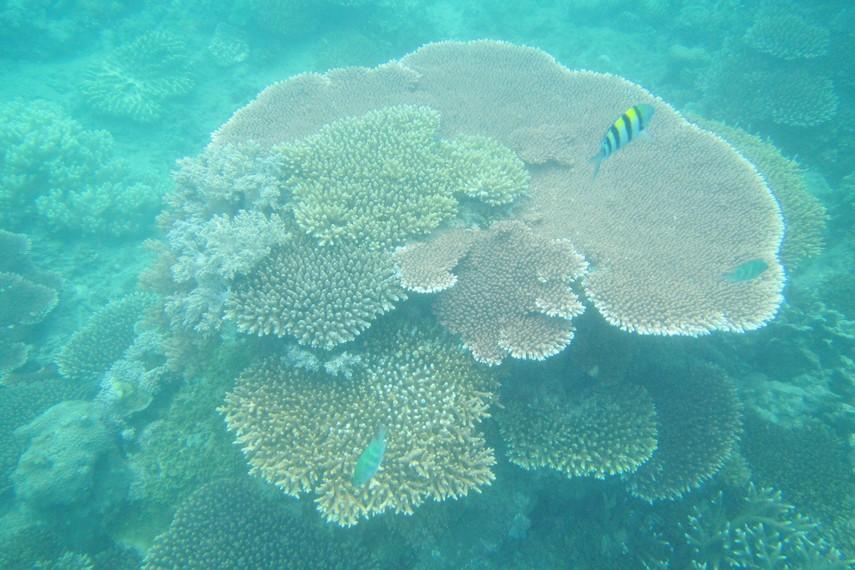 Alam bawah laut di Pulau Lengkuas menjadi salah satu yang terkenal indah di negeri Laskar Pelangi
