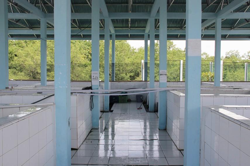 Selain berfungsi sebagai pusat konservasi, saat ini UPTD Pusat Konservasi Penyu Pariaman juga menjadi salah satu objek eko-wisata