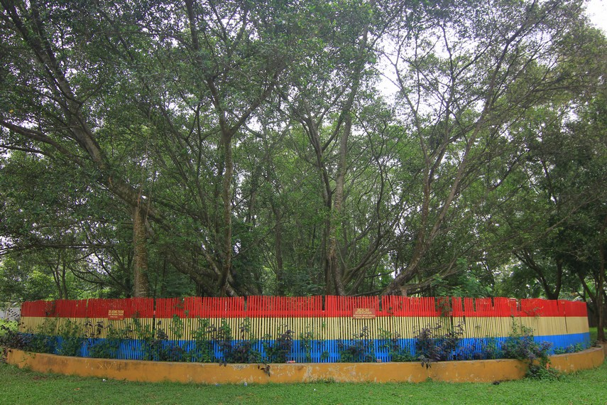 Pohon Cinta menjadi salah satu situs peninggalan yang terdapat di Pulau Kamaro