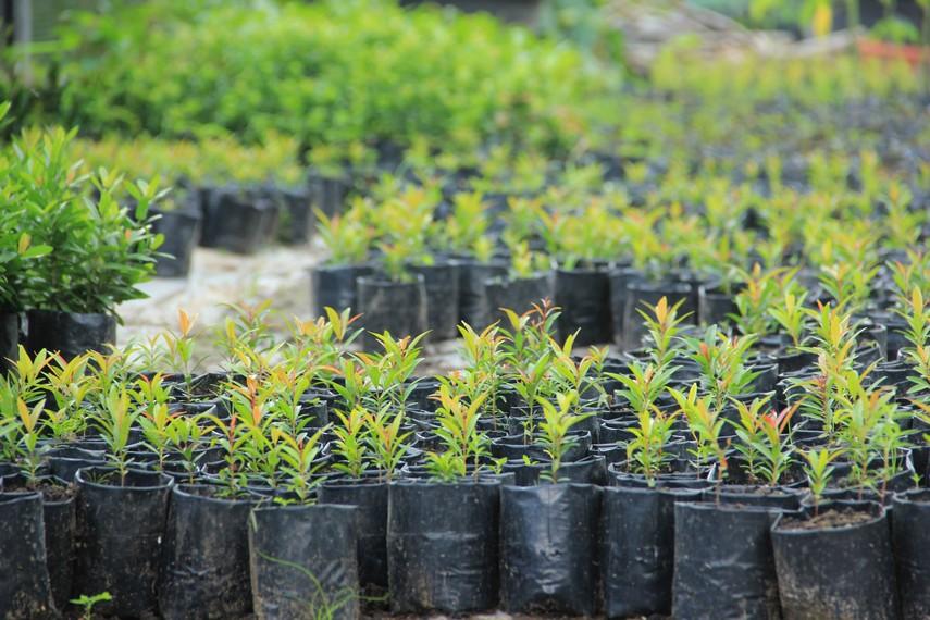 Sebagian bibit tumbuhan yang dijaga dan dikelola dengan baik perkembangannya