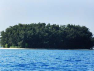 Menyaksikan Konservasi Elang Bondol di Pulau Kotok