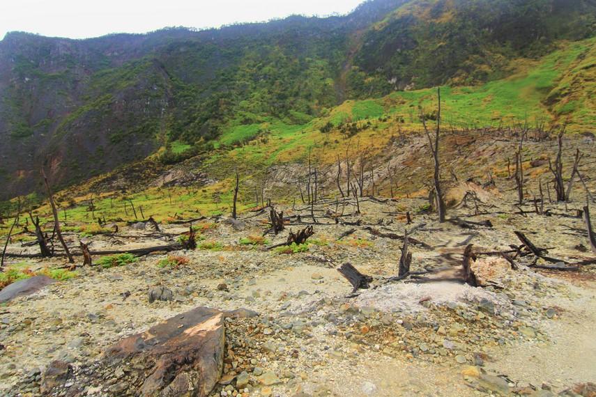 Hutan mati menjadi bagian yang dapat disaksikan saat berkunjung ke Kawah Papandayan