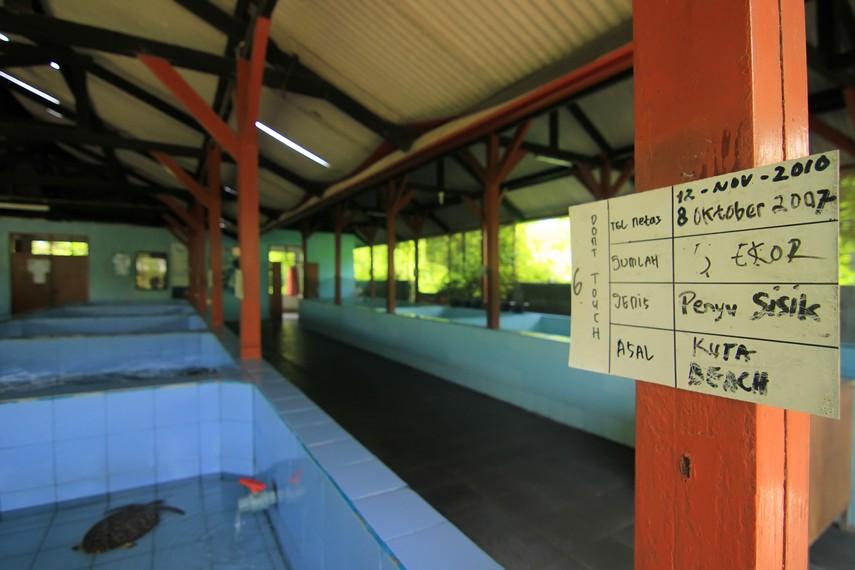 Balai berisi kolam berukuran 2,5 x 2,5 meter persegi yang digunakan sebagai tempat pembesaran tukik