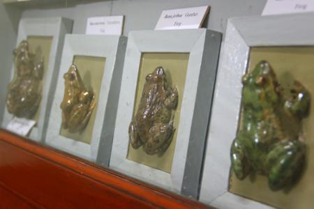 Museum Zoologi Bogor tidak hanya memajang dan merawat berbagai koleksi fauna, tetapi juga melakukan penelitian seputar fauna yang ada di Indonesia