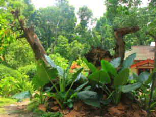 Mengunjungi Hutan Suranadi yang Lebat