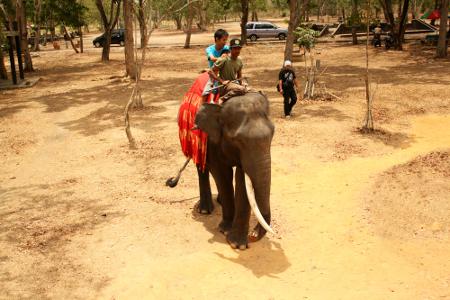 Para pengunjung terlihat menikmati menaiki gajah dan berkeliling Kawasan Pusat Konservasi Gajah