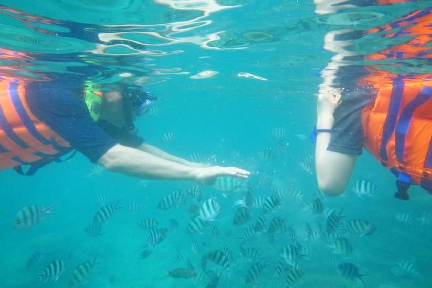 Melakukan snorkeling sambil bercengkrama dengan ikan-ikan cantik menjadi hal yang menyenangkan di Pulau Lengkuas