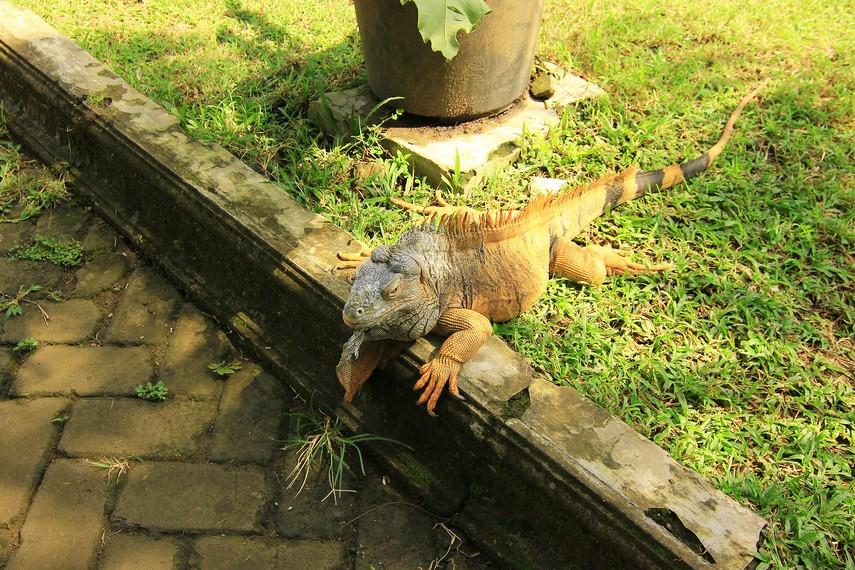 Seluruh reptil di taman ini milik anggota komunitas pecinta reptil. Pemeliharaan reptil dilakukan oleh anggota komunitas tersebut