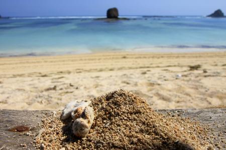 Pasir yang menyerupai biji merica menjadikan Pantai Seger sangat unik untuk dikunjungi