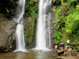 Berpetualang di Vegetasi Hutan Hujan Tropis