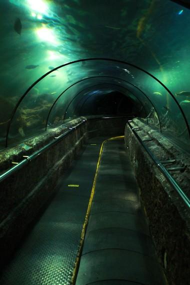 Lorong Main Tank, merupakan wahana dengan sensasi serasa berjalan di dalam laut