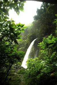Tinggi Curug Cibeureum berkisar antara 40-50 meter dan terletak pada ketinggi 1.675 meter di atas permukaan laut