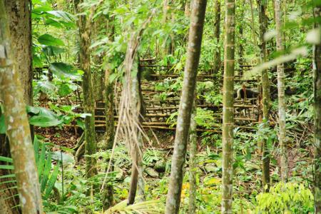 Makam leluhur Kampung Adat Dukuh Dalam Syekh Abdul Jalil yang terletak di dalam hutan Gunung Dukuh