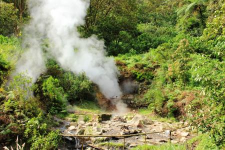 Dikelilingi dengan pepohonan yang hijau, wilayah Kawah Kamojang sangat nyaman untuk dikunjungi
