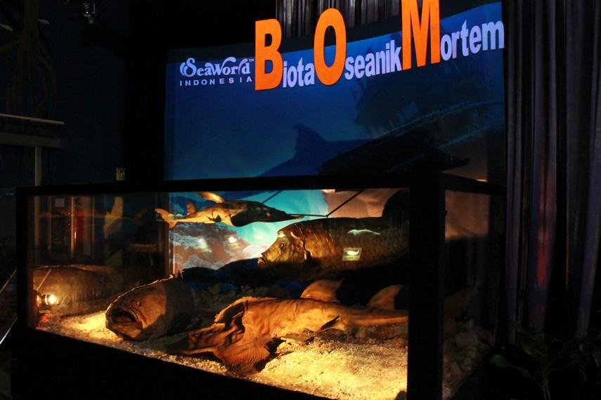 Biota OSeanik Mortem, akuarium yang menyimpan berbagai jenis ikan purba dari wilayah Oseania