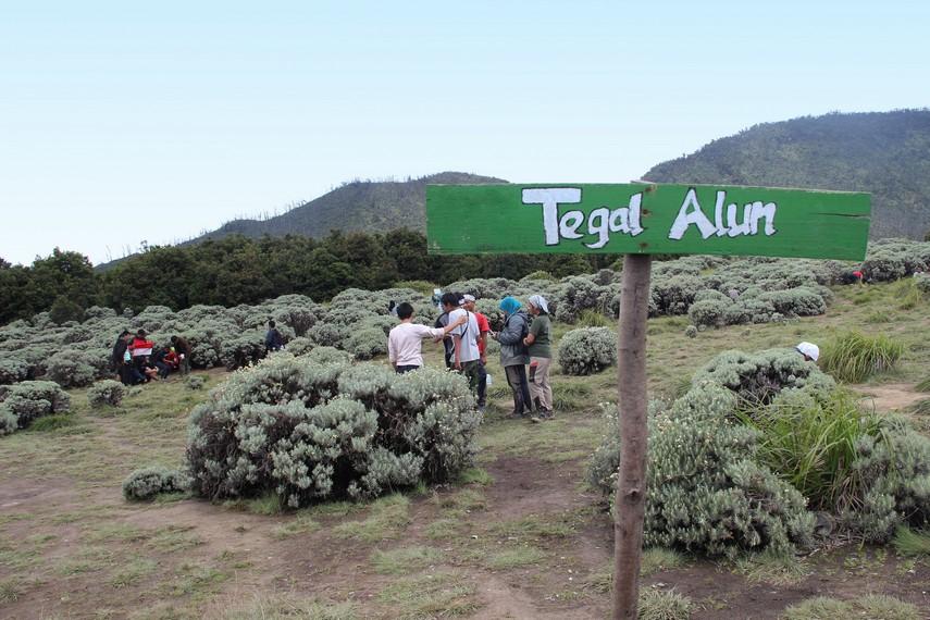 Tegal Alun menjadi titik tertinggi atau puncak bagi para pendaki yang mendaki Gunung Papandayan
