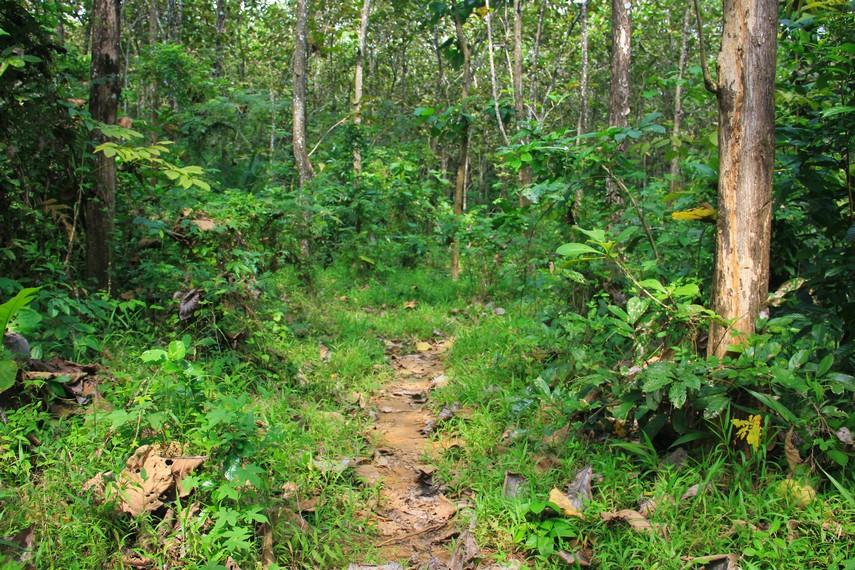 Dari balik hutan Desa Sawarna, Kecamatan Bayah, Kabupaten Lebak, Banten, inilah Pantai Gua Sarah bersembunyi