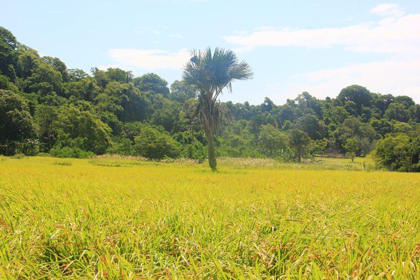 Selain Bunaken, ada juga gugusan pulau yang berjajar di bagian pantai tenggara Manado bernama Pulau Tumbak