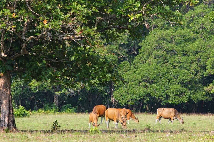 Padang Cidaon terletak di sebelah Barat Taman Nasional Ujung Kulon berupa hamparan padang rumput yang luas