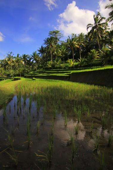 Subak merupakan sistem swadaya masyarakat yang berfungsi mengatur pembagian aliran irigasi persawahan di Bali