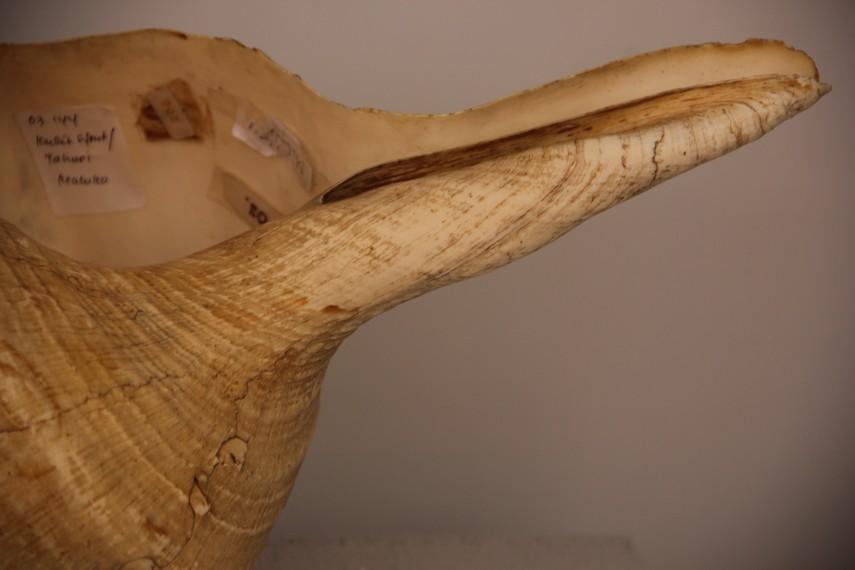 Tahuri alat musik berupa terompet kerang khas Maluku