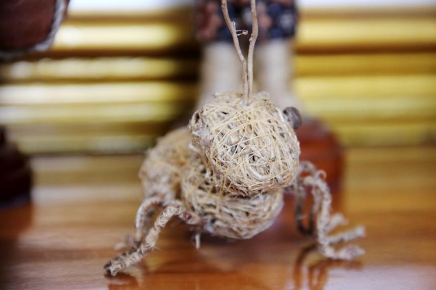Tanaman akar wangi memiliki nama ilmiah <i>Vetiveria zizanioide</i>