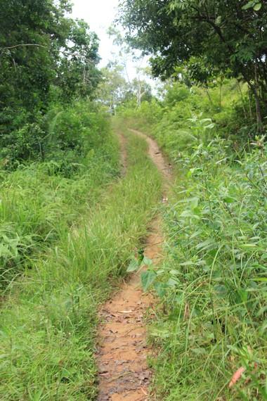 Jalan setapak harus dilewati pengunjung sebelum sampai ke Pantai Tanjung Kiras