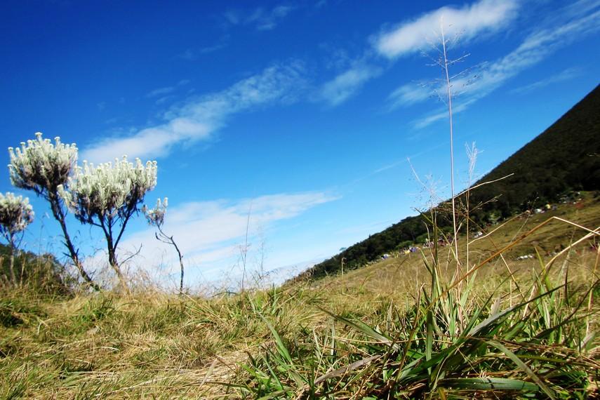 Gunung Gede-Pangrango diresmikan sebagai taman nasional sejak tahun 1980