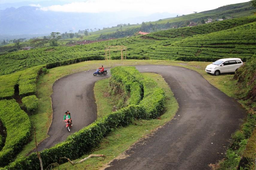 Kebun Teh Pagaralam dikelola oleh PTPN VII yang unit produksinya terfokus pada agribisnis dan perkebunan