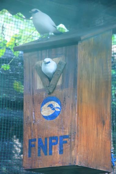 Sepanjang 2006-2010, FNPF berhasil menetaskan 58 ekor jalak Bali dari populasi awal 64 ekor burung yang dilepaskan ke alam