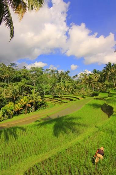 Sistem subak mengajarkan kearifan lokal bagi petani agar hidup serasi dengan alam untuk mendapat panen yang optimal