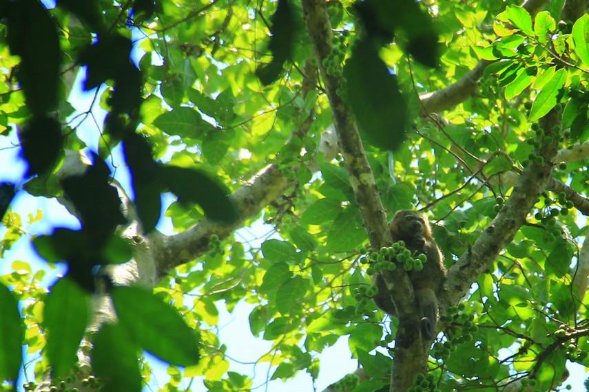 Taman wisata alam ini menjadi habibat bagi satwa endemik Sulawesi yaitu tarsius