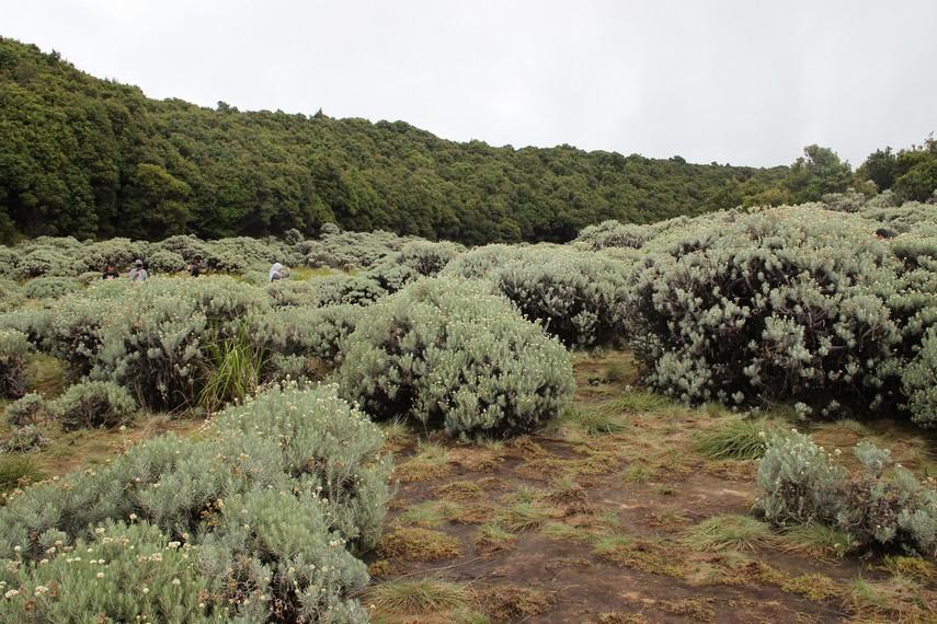 Akhir dari perjalanan mendaki yang penuh dengan jalan terjal dan bebatuan dengan sebuah keindahan berupa padang edelweis