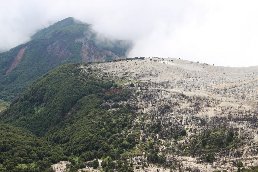 Kawasan Hutan Mati lahir dari sebuah bencana erupsi Gunung Papandayan yang terjadi di tahun 2002 silam